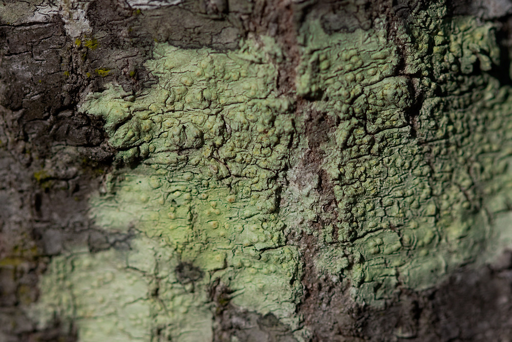 Color 18/31:  Lichen