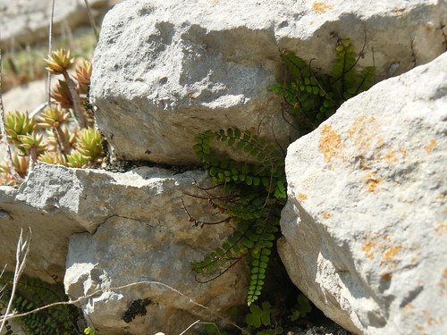 growing in the walls