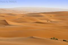 Desert Dunes (TARIQ-M) Tags: texture sahara landscape sand waves pattern desert ripple patterns dunes wave ripples riyadh saudiarabia hdr app       canonef70200mmf4lusm    canon400d          tariqm  tariqalmutlaq kingofdesert ripplesripple 100606169424624226321postsnajd12sa