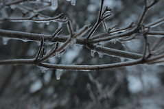 Winter 2011 (crichgraphics) Tags: new trees winter england baby snow color tree ice nature lensbaby lens ma outside nikon massachusetts branches mass composer d5000