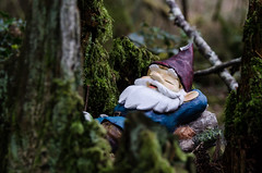 Caught Napping (Brian Xavier) Tags: photography gnome gnomes springflowers springtime familytime photographicarts sleepygnome springhike beardedgnome sleepinggnome sabbathhike bxavier bxphoto brianxavierphotography brianxavier bxfoto bxfotocom gnomeinthewoods asleeponthewatch gnomeinthetreetrunk unsuspectinggnome