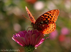 Remember, people will judge you by your actions, not your intentions. You may have a heart of gold.... (itucker, thanks for 2.4+ million views!) Tags: butterfly macro hbm bokeh dukegardens greatspangledfritillary