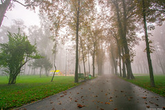 Misty morning-6.jpg (Elen_L) Tags: 2016 kharkov park september ukraine autumn beauty city fog landscape morning nature naturewakesup