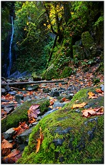 Fall in the Park (CanMan90) Tags: waterfall niagarafalls goldstreampark provincialpark autumn longexposure moss leaves cans2s canon rebelt3i victoria britishcolumbia vancouverisland canada outdoors trees