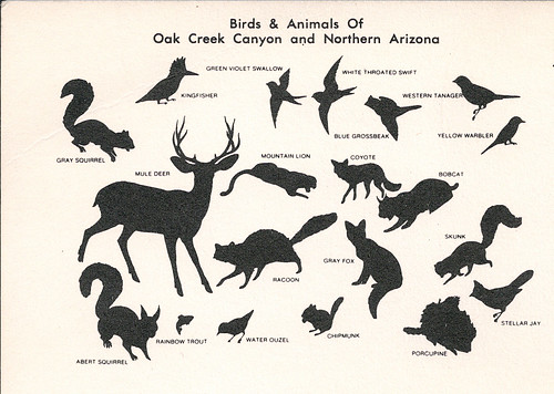 oak creek postcard back