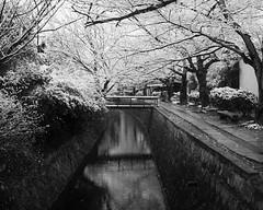IMG_2675 (kaneko_ryo) Tags: winter snow kyoto    eos5dmark