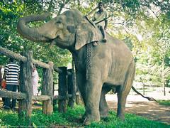 Водитель слона
