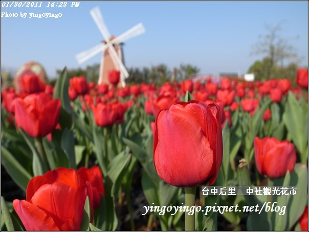 台中后里_中社光觀花市20110130_R0017612
