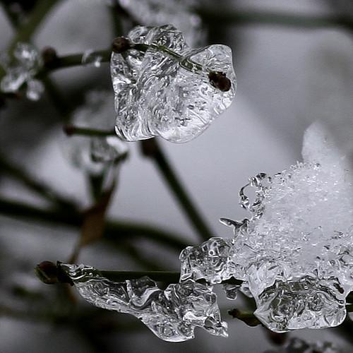 Ice - IMG_4824ax2