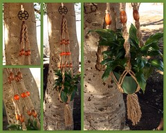 Indian Summer Macram Plant Hanger (Macramaking- Natural Macrame Plant Hangers) Tags: wood orange plants brown plant green beauty hippies vintage garden idea beads nc spring pretty natural herbs asheville handmade chocolate unique decorative character cottage creative fluffy northcarolina funky retro deck gift porch shelby daisy 70s hanging flowing chic etsy cheerful birthdaygift weavers groovy weddinggift knots weaving hanger sunroom swirly beachhouse macrame fibers detailed hangingbasket blackmetal artscrafts jute containergardening macram planthanger orangeberries mothersdaygifts macrameplanthanger macramakin macramaking 5plyjute httpwwwetsycomshopmacramaking