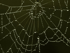 perle di rugiada (mat56.) Tags: macro drops web pearls dew rugiada perle gocce ragnatela mat56 agosto2011challengewinnercontest