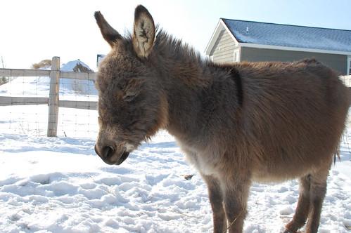 donkey_nap