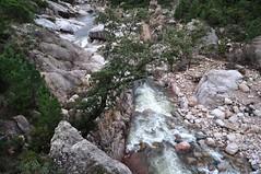Le Cavu vers l'aval depuis le pont de Marion
