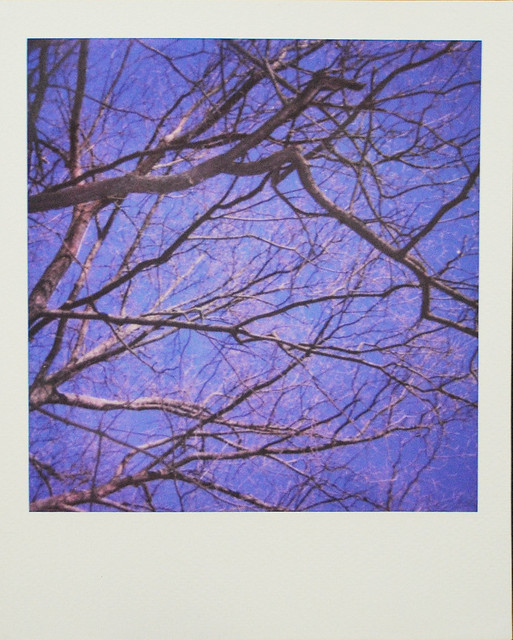 Branchworthy