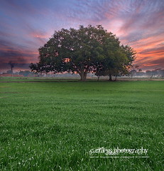 Tree, Fields Sialkot (Sajjad Tufail.) Tags: camera blue pakistan red sun color tree green nature colors beauty by clouds digital wonderful landscape photography dawn evening shot natural dusk sony captured meadow cybershot explore h photograph fields crops 50 cyber sialkot sajjad h50 explored camless tufail