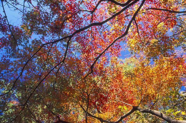 紅葉と空のフリー写真素材