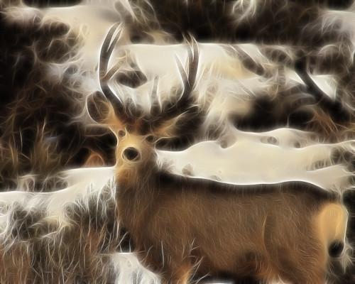 8x10 Mule deer fract IMG_0402 -1