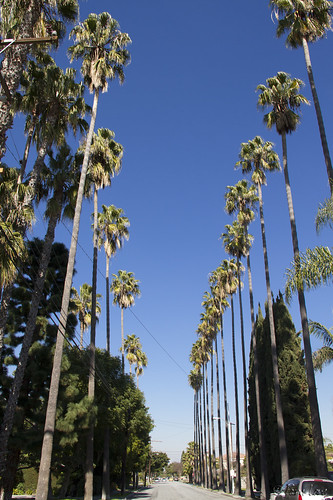 Palms on Tweedy Lane