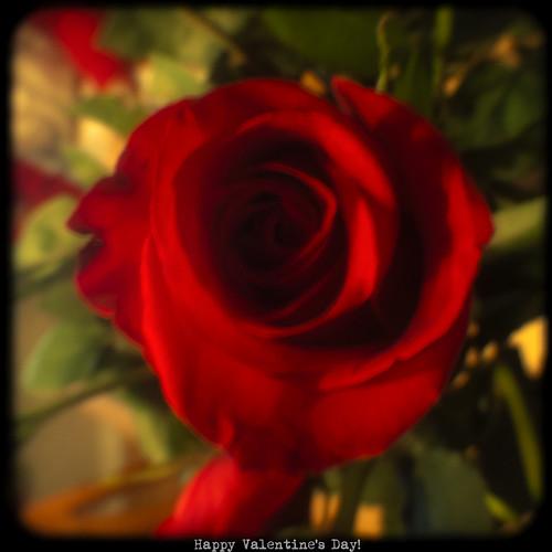 53:365 Valentine rose TtV