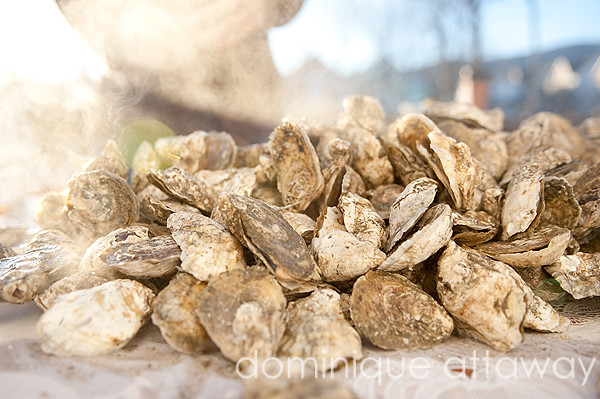 oyster steam web
