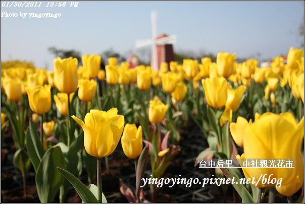 台中后里_中社光觀花市20110130_I6160