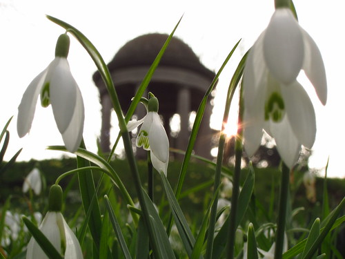 Snowdrops at the Temple of Aeolus, Kew Gardens