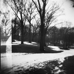 pond Walks 023 (craigCloutier) Tags: city autumn trees winter white snow storm black cold tree fall 120 nature boston forest mediumformat season square outside outdoors holga pond woods seasons branches snowstorm arboretum trunk format scape negatives jamaicaplain 2010 2011 arborial