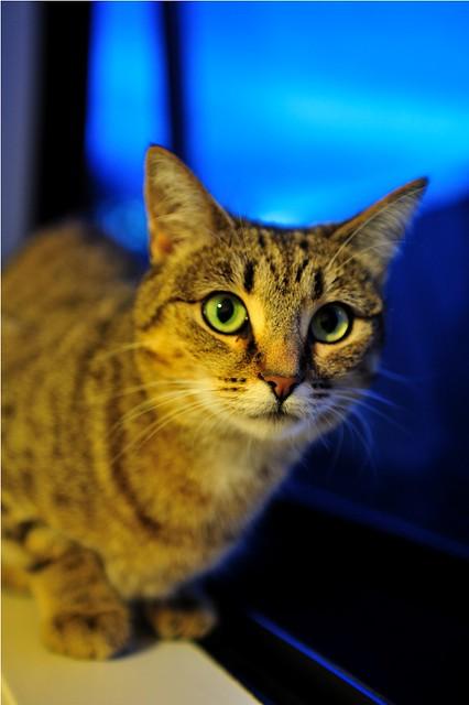 Home's cat