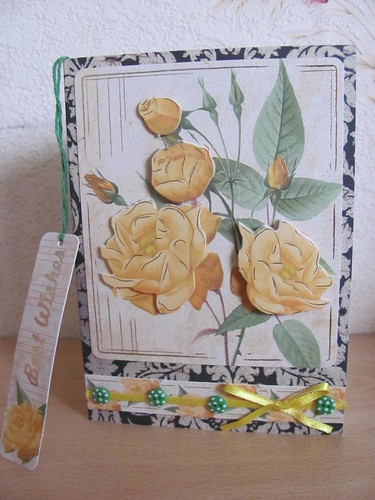 Yellow Roses 002