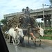 Life in India -  - 0488
