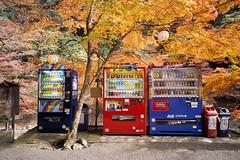 Kyoto_20101020_E100G-Roll-27_28 (Lordcolus) Tags: color tree film japan leaf maple kyoto kodak slide contax 京都 vendingmachine 日本 g2 高雄 contaxg2 e100g g21 門外漢的京都 一個人的旅行 travelalone 洛西 nikonsupercoolscan9000ed