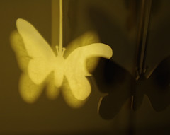 Butterflies (Pentax K-r double exposure experiment) (CardiganKate) Tags: detail wings candle doubleexposure spin butterflies experiment multipleexposure reflective 1855mm pentaxkr wwwkatebenjamincom