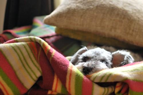 ugo w/blanket