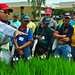 IRRI scientist talks to farmers at field day
