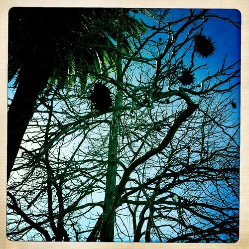 sunny day palm tree