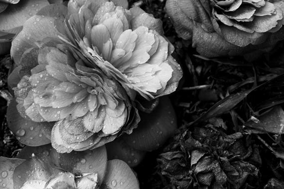flor6_pb