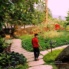 IMG_31h__0021 Royal Gardens Siribhume (ol'pete) Tags: film gardens thailand parks resort scanned chiangmai canoneos350d pwr เชียงใหม่ ประเทศไทย ดอยอินทนนท์ สวน earthasia horticlture totallythailand doilopete royalgardensirbhume สวนหลวงสิริภูมิ