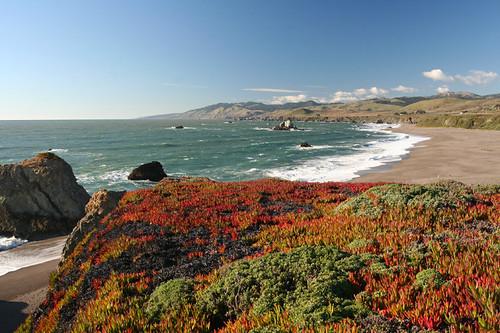 California coast (and ice plants)