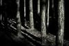 Clandestine (Mark J P) Tags: park wood uk greatbritain trees shadow england blackandwhite bw tree english monochrome forest mono blackwhite woods shadows unitedkingdom britain monochromatic hampshire fave gb british desaturated diamondclassphotographer flickrdiamond thebritishisles