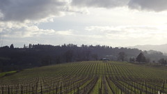 Willamette Valley (Jimmy and Paige Short) Tags: oregon willamette newburg