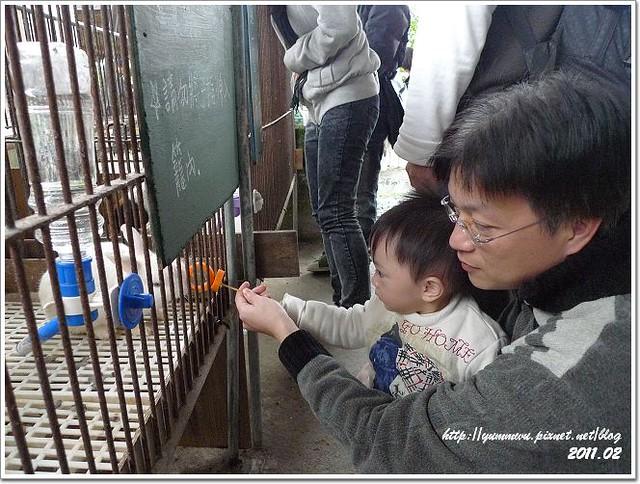 宜農牧羊場 (11)