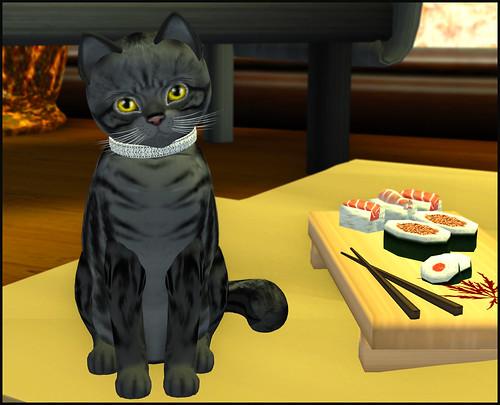 KittyCats Store 2