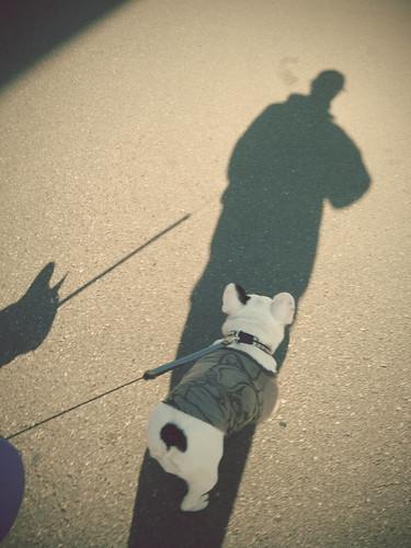 散歩。天気いい。ちっと寒いけど。