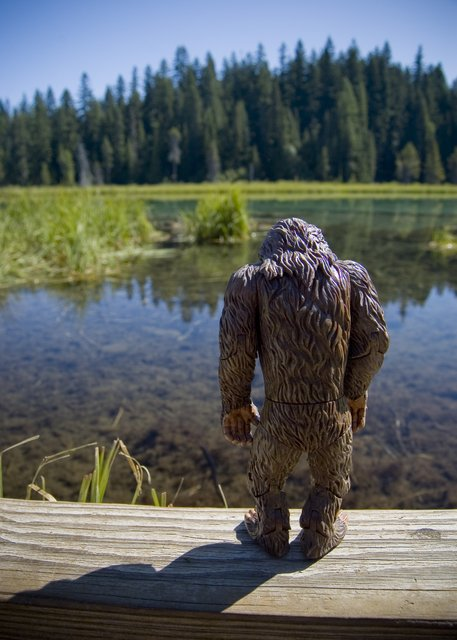 Little Bigfoot Stops to Reflect