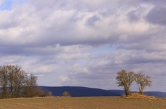 (:Linda:) Tags: two sky cloud germany landscape village wolke thuringia tre baretree lovenature twotrees cloudysky wolkig holunder elderberrytree vorfrhling prespring brden eroticnature treecouple bewlkterhimmel nackterbaum