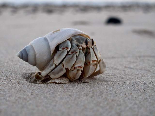 Hermit Crab at Cabo Pulmo