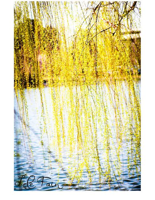 springtime2
