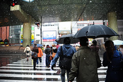 Blizzard (Huey Yoong) Tags: city winter people urban snow cold wet japan umbrella walking asia day streetphotography pedestrian falling osaka namba dotombori kansai zebracrossing 5photosaday nikond700 nikkor28300mmvr