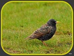 beak feathers starling worm wildbird