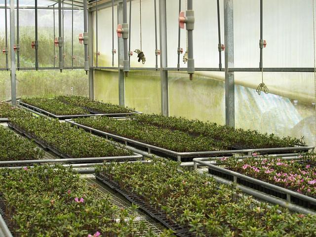 孝義苗圃-溫室